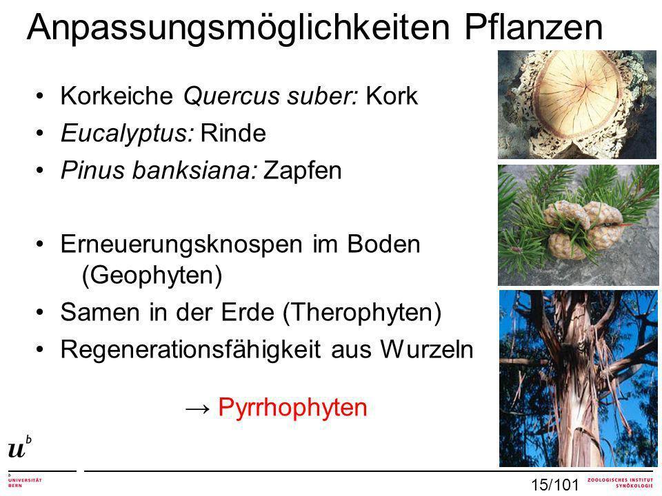 Anpassungsmöglichkeiten Pflanzen