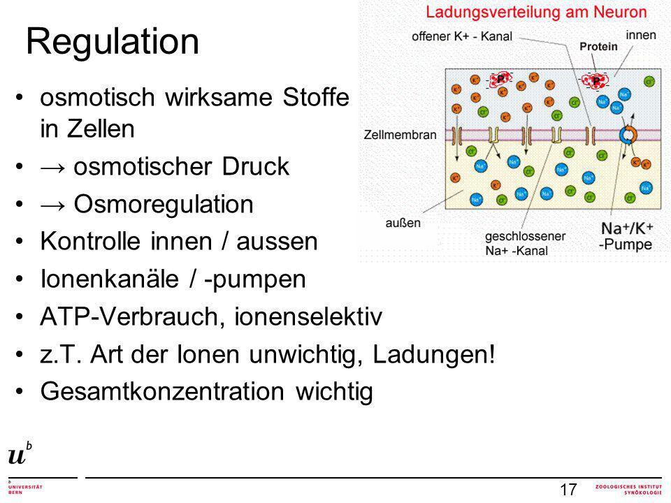 Regulation osmotisch wirksame Stoffe in Zellen → osmotischer Druck