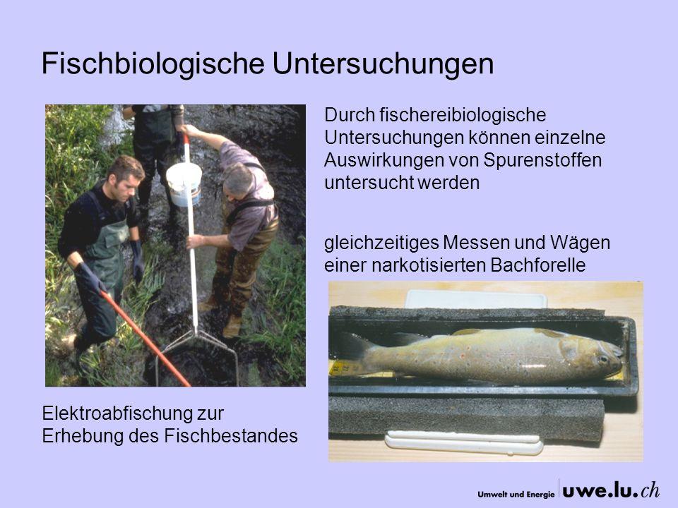 Fischbiologische Untersuchungen