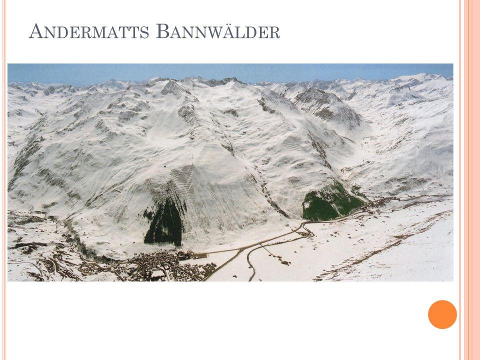 Andermatts Bannwälder