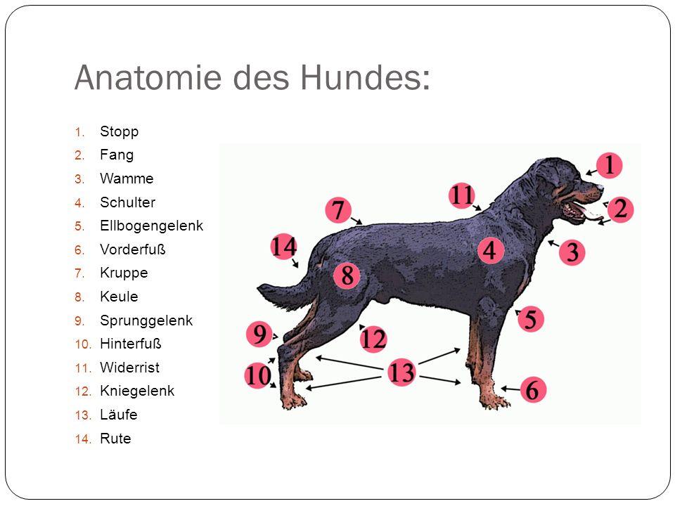 Atemberaubend Hunde Bein Anatomie Bilder - Menschliche Anatomie ...