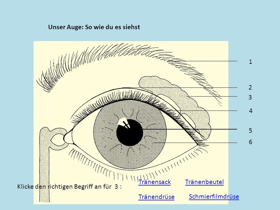 Unser Auge: So wie du es siehst