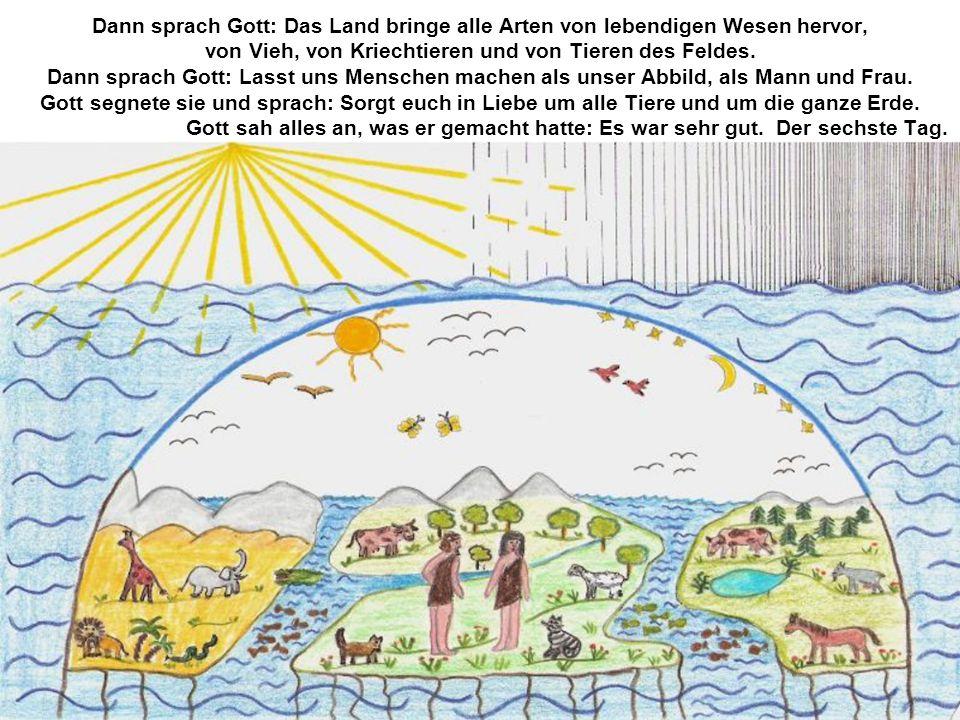 Dann sprach Gott: Das Land bringe alle Arten von lebendigen Wesen hervor, von Vieh, von Kriechtieren und von Tieren des Feldes.