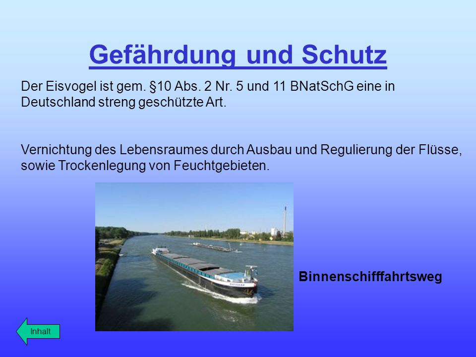 Gefährdung und Schutz Der Eisvogel ist gem. §10 Abs. 2 Nr. 5 und 11 BNatSchG eine in Deutschland streng geschützte Art.