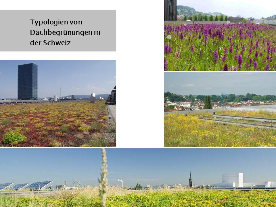 Typologien von Dachbegrünungen in der Schweiz