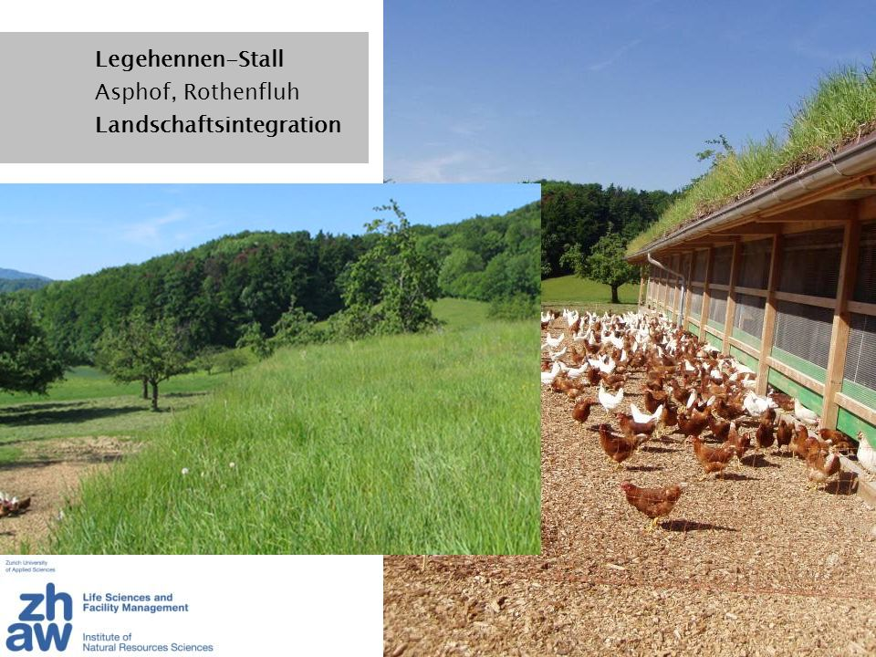 Legehennen-Stall Asphof, Rothenfluh