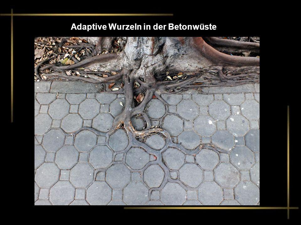 Adaptive Wurzeln in der Betonwüste