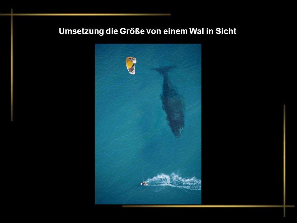 Umsetzung die Größe von einem Wal in Sicht