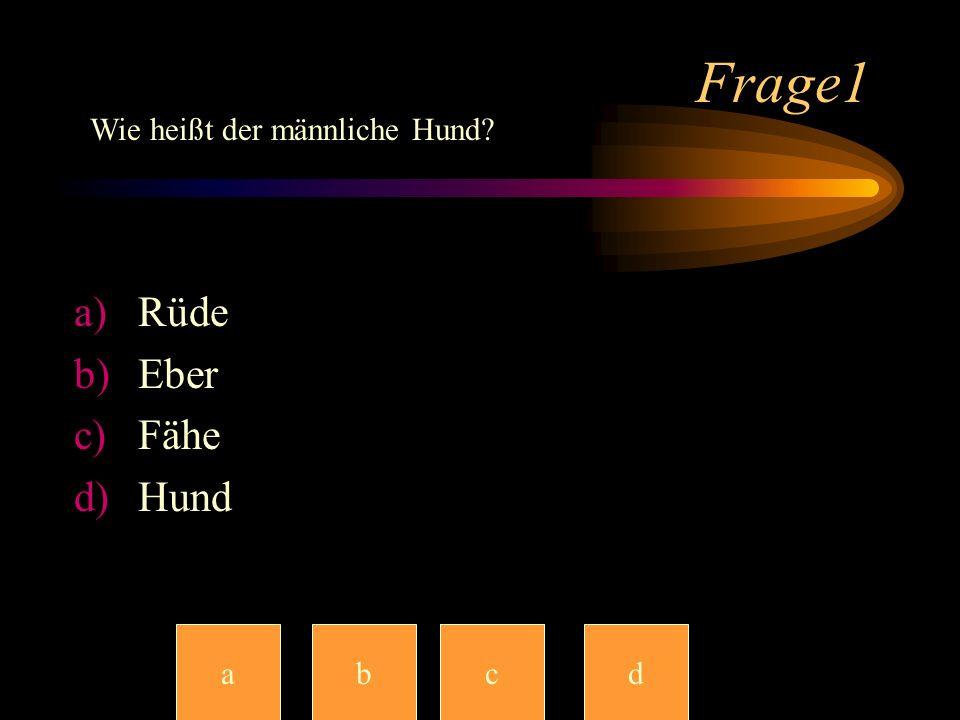 Frage1 Wie heißt der männliche Hund Rüde Eber Fähe Hund a b c c d