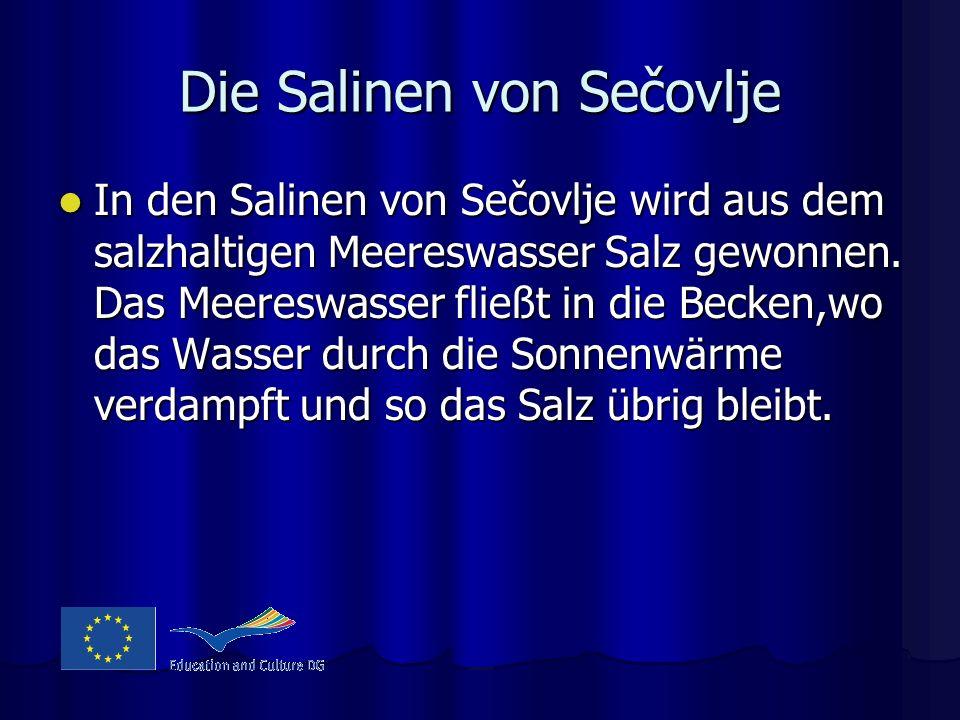 Die Salinen von Sečovlje