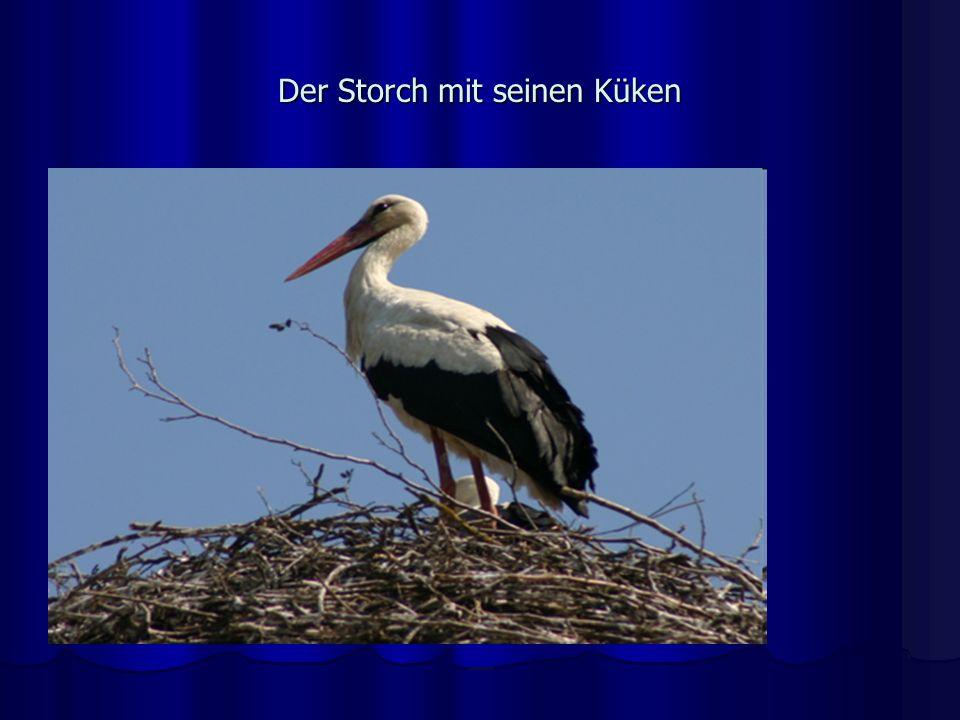 Der Storch mit seinen Küken