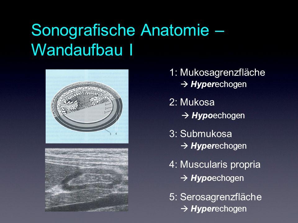 Sonografische Anatomie – Wandaufbau I