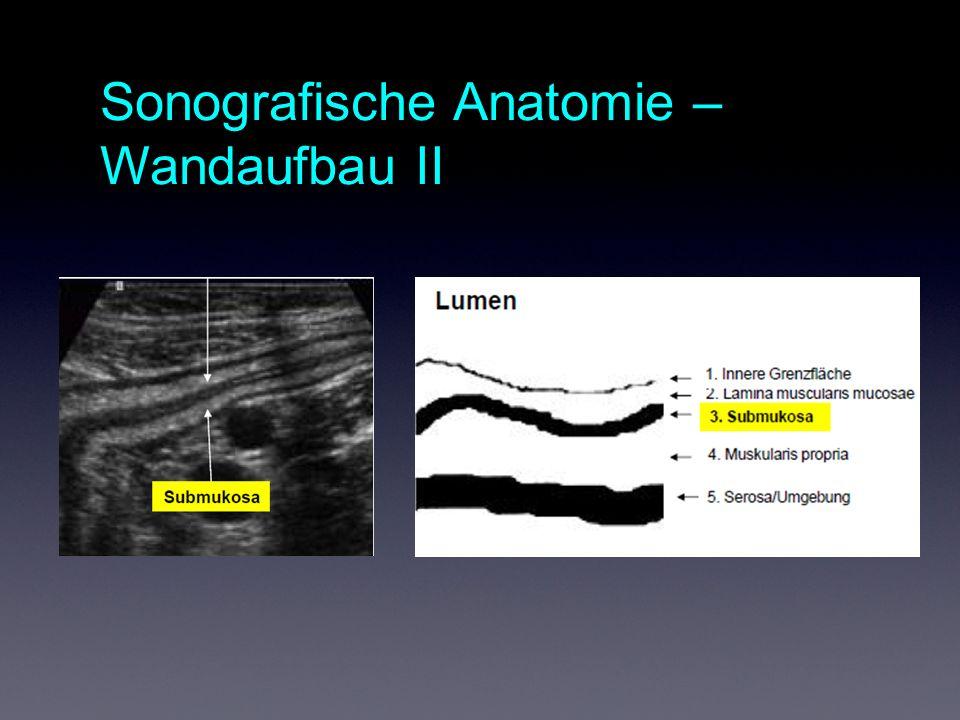 Sonografische Anatomie – Wandaufbau II