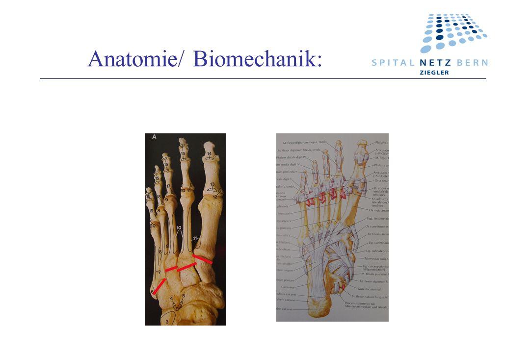 Anatomie/ Biomechanik: