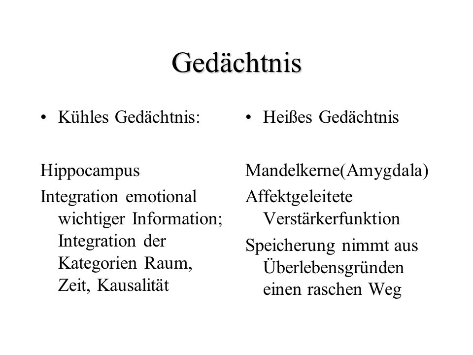 Gedächtnis Kühles Gedächtnis: Hippocampus