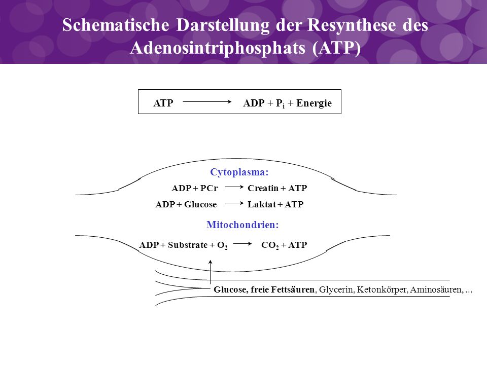 Schematische Darstellung der Resynthese des Adenosintriphosphats (ATP)