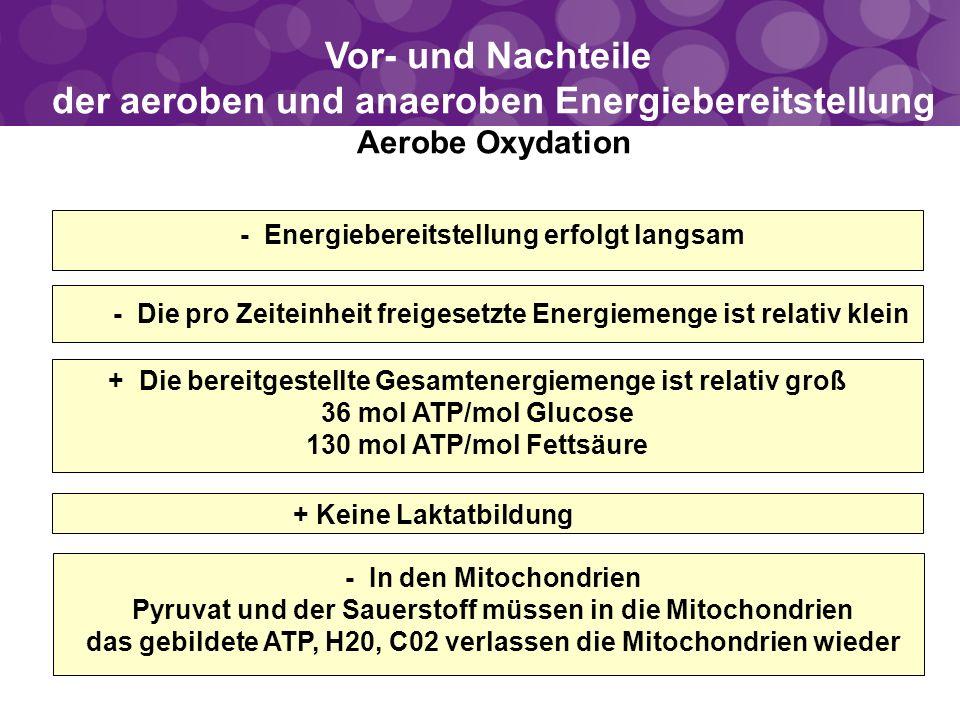 Vor- und Nachteile der aeroben und anaeroben Energiebereitstellung