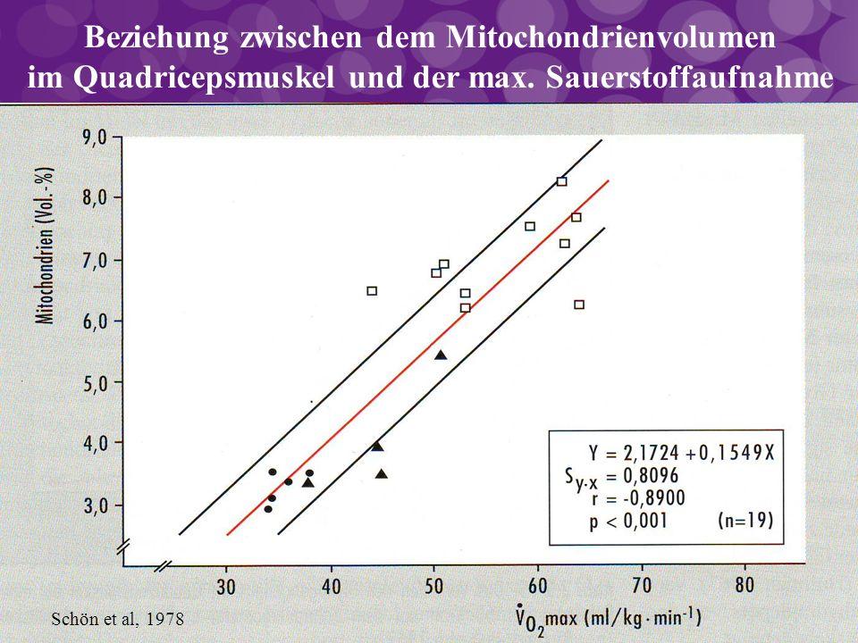 Beziehung zwischen dem Mitochondrienvolumen