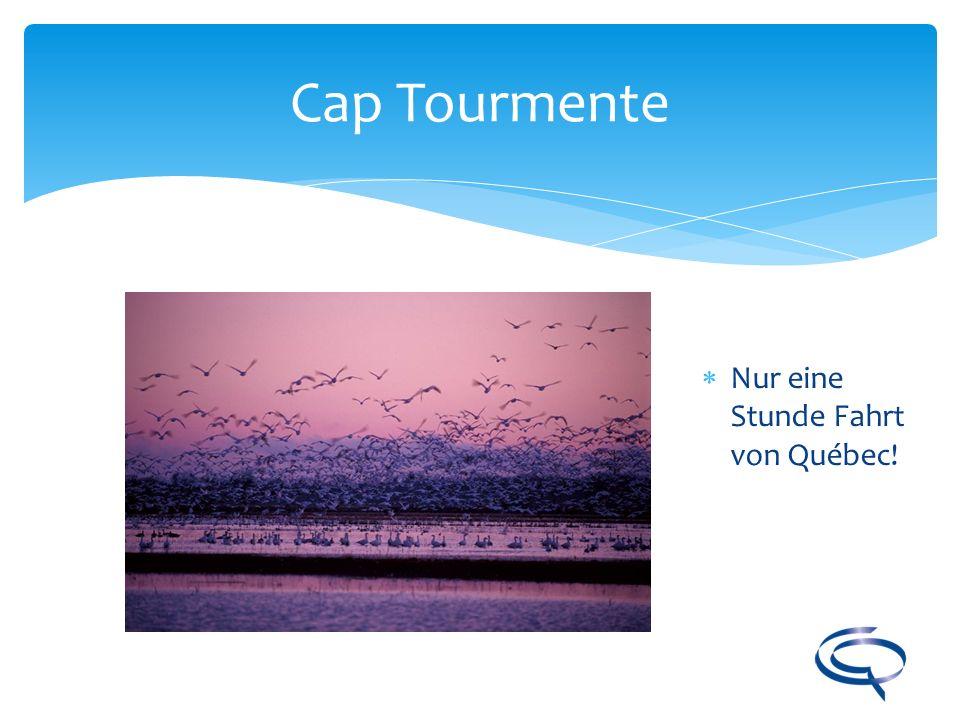 Cap Tourmente Nur eine Stunde Fahrt von Québec!