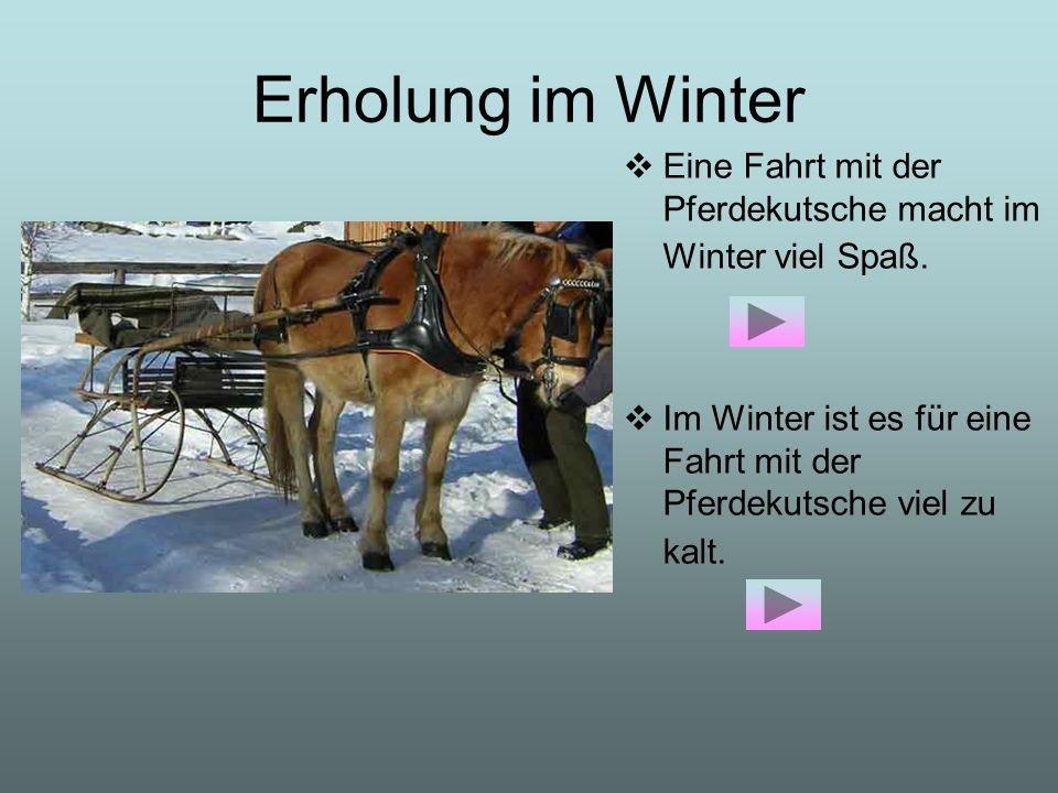 Erholung im Winter Eine Fahrt mit der Pferdekutsche macht im Winter viel Spaß.