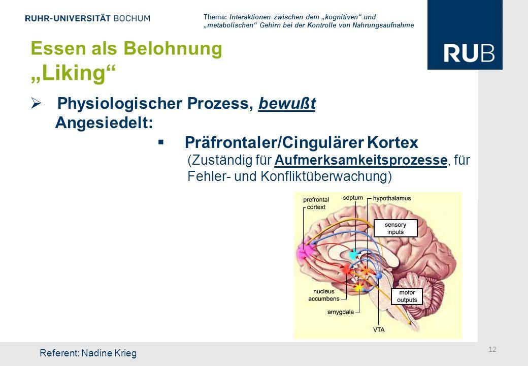 """""""Liking Essen als Belohnung Physiologischer Prozess, bewußt"""