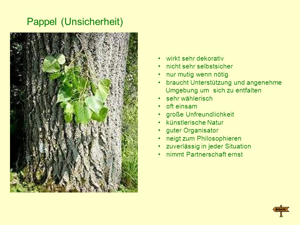 Pappel (Unsicherheit)