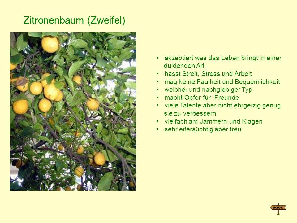 Zitronenbaum (Zweifel)