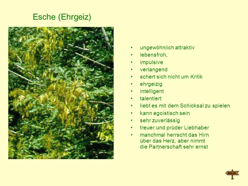 Esche (Ehrgeiz) ungewöhnlich attraktiv lebensfroh, impulsive