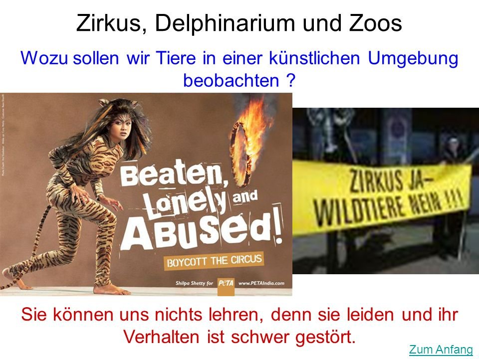 Zirkus, Delphinarium und Zoos
