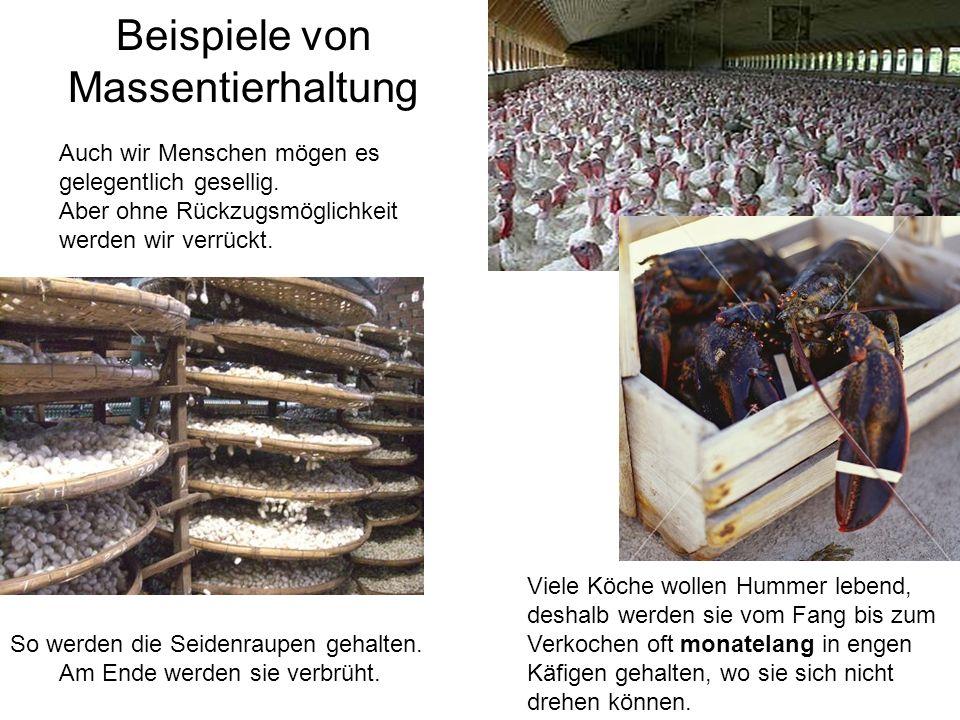 Beispiele von Massentierhaltung