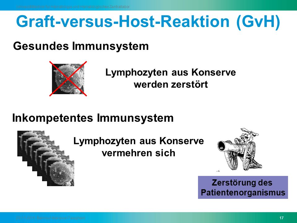 Graft-versus-Host-Reaktion (GvH)