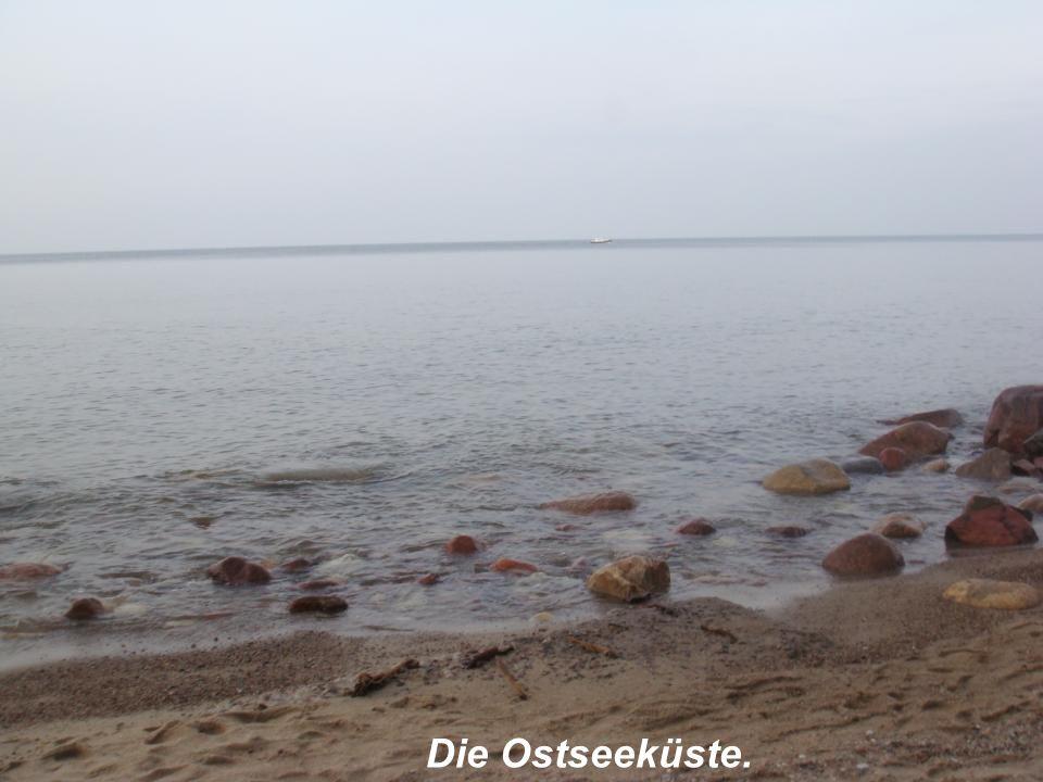 Die Ostseeküste.