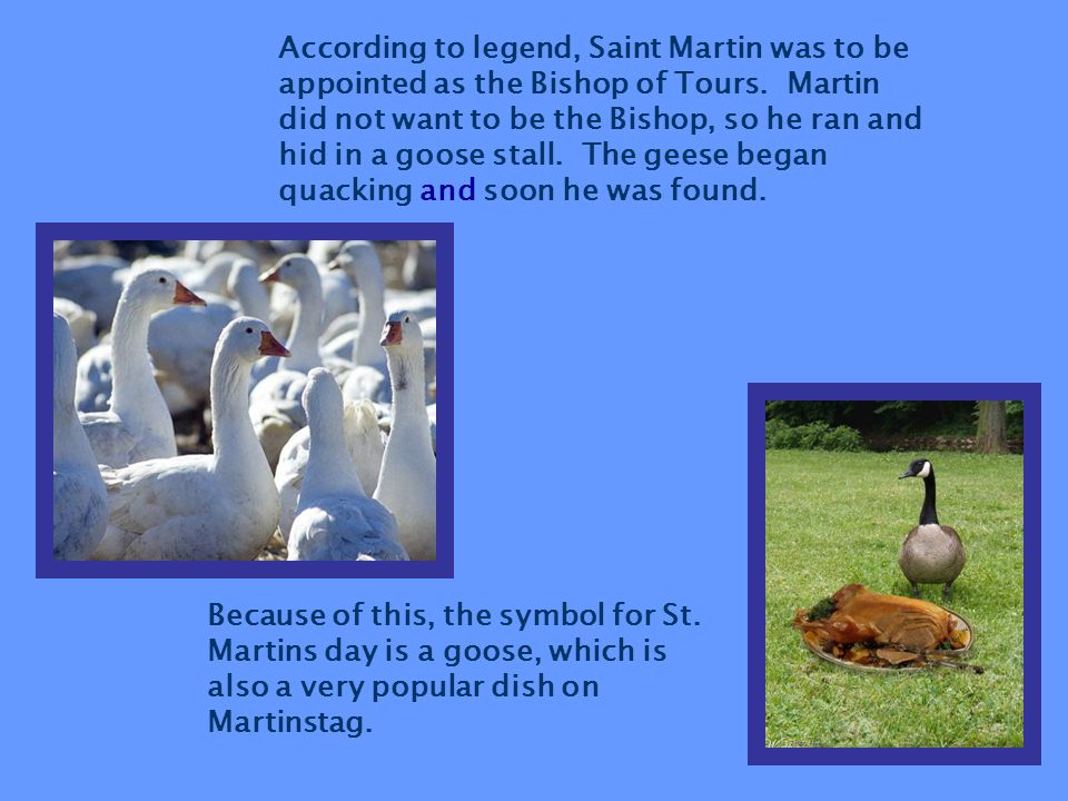 According to legend, Saint Martin was to be appointed as the Bishop of Tours. Martin did not want to be the Bishop, so he ran and hid in a goose stall. The geese began quacking and soon he was found.