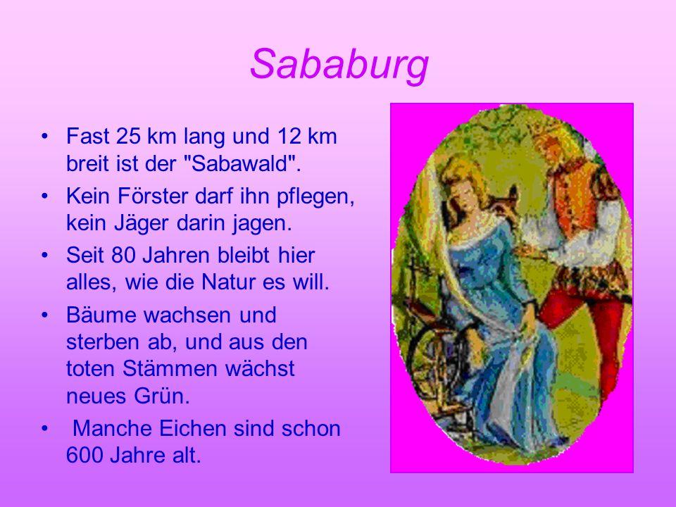 Sababurg Fast 25 km lang und 12 km breit ist der Sabawald .