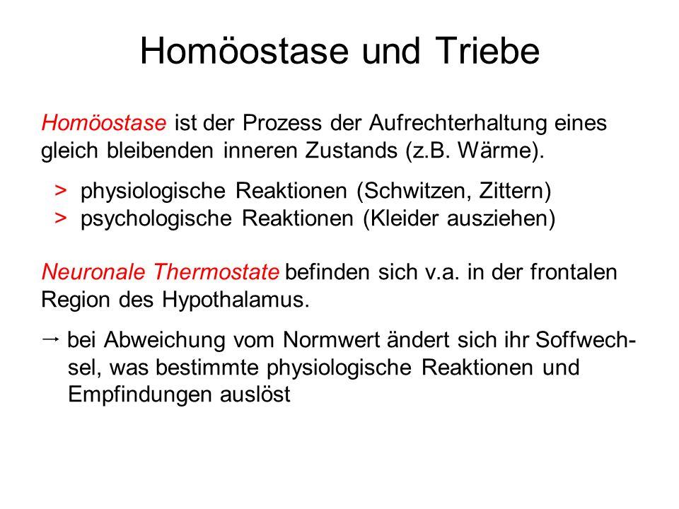 Homöostase und Triebe Homöostase ist der Prozess der Aufrechterhaltung eines gleich bleibenden inneren Zustands (z.B. Wärme).