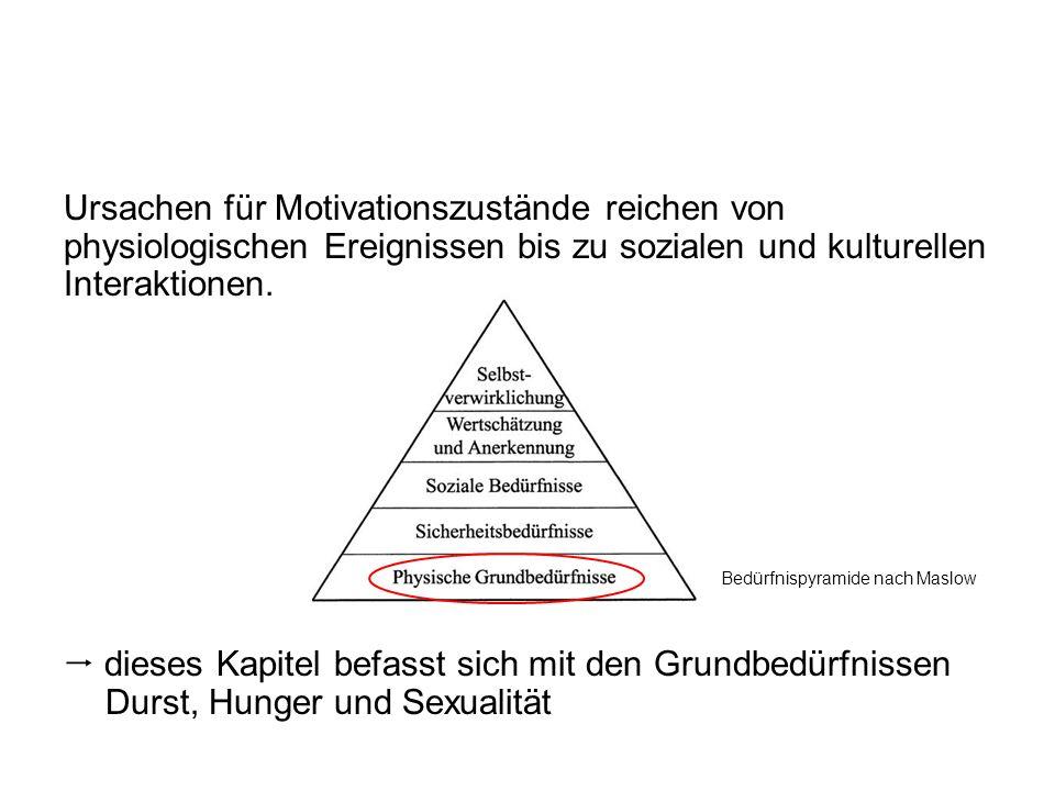 Ursachen für Motivationszustände reichen von physiologischen Ereignissen bis zu sozialen und kulturellen Interaktionen.