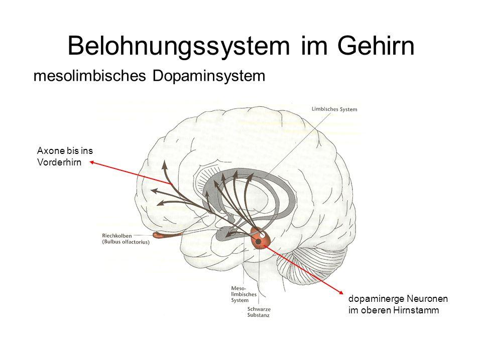 Belohnungssystem im Gehirn