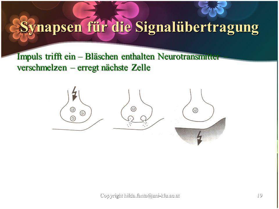 Synapsen für die Signalübertragung