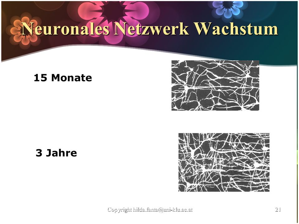 Neuronales Netzwerk Wachstum