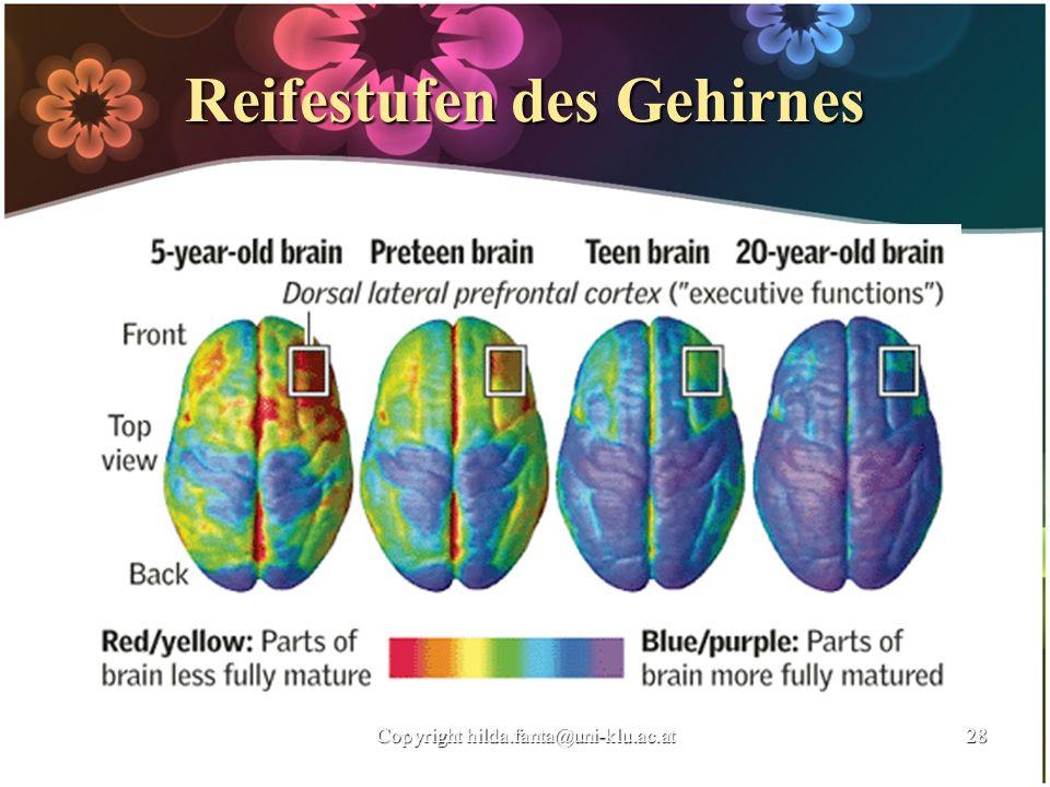 Reifestufen des Gehirnes