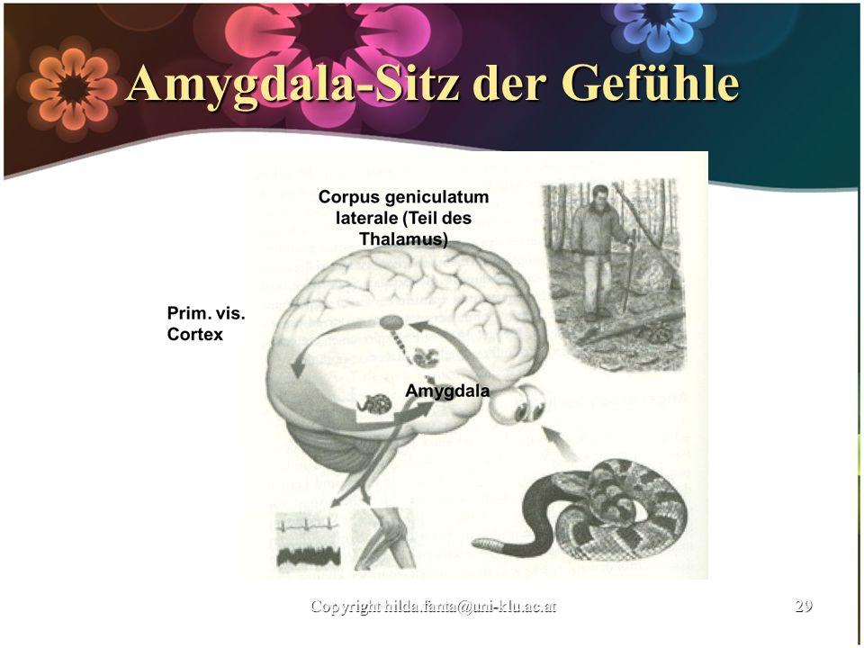 Amygdala-Sitz der Gefühle