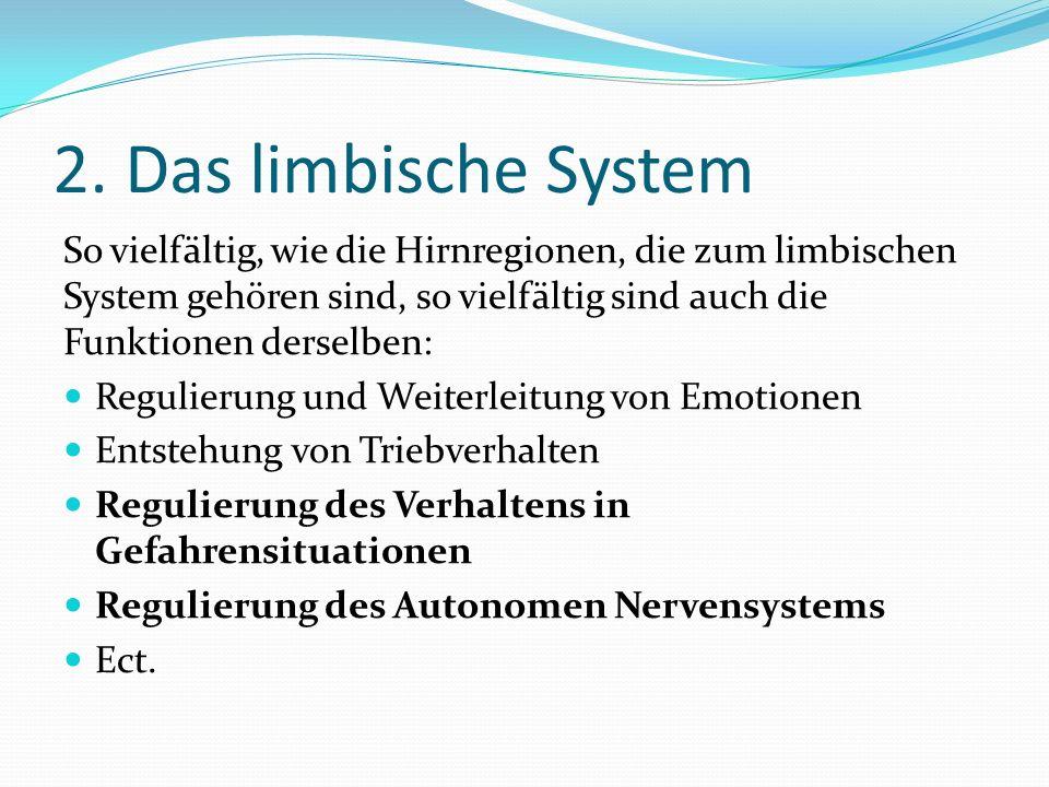 2. Das limbische System