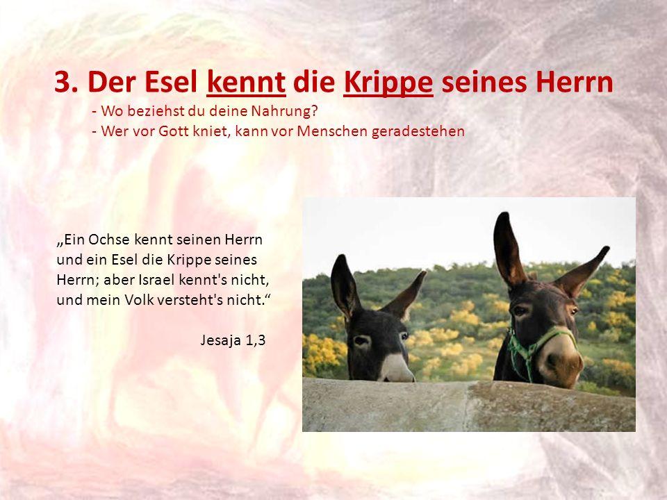 3. Der Esel kennt die Krippe seines Herrn