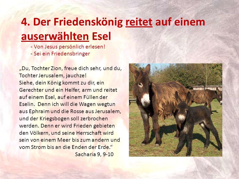 4. Der Friedenskönig reitet auf einem auserwählten Esel