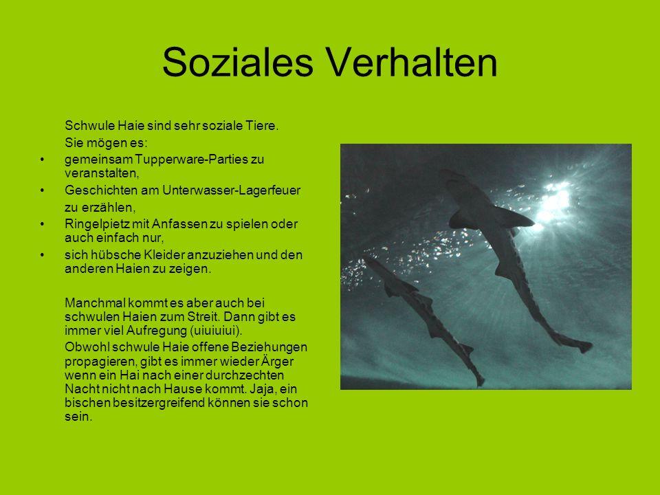 Soziales Verhalten Schwule Haie sind sehr soziale Tiere. Sie mögen es:
