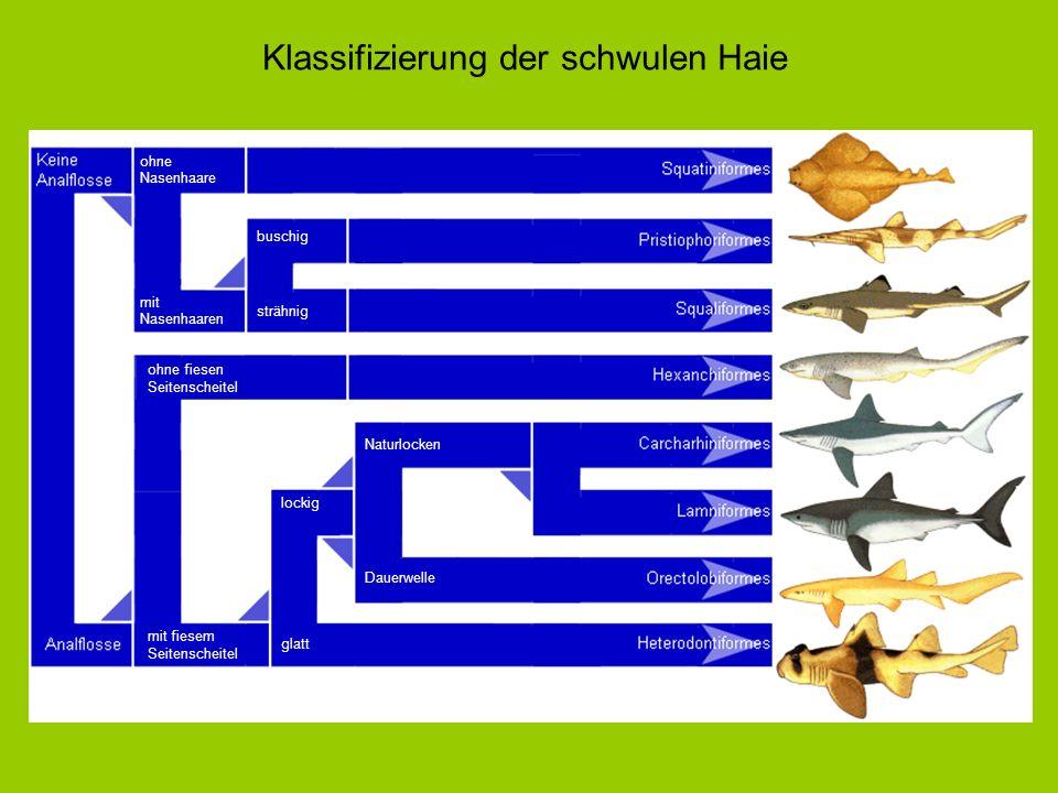 Klassifizierung der schwulen Haie