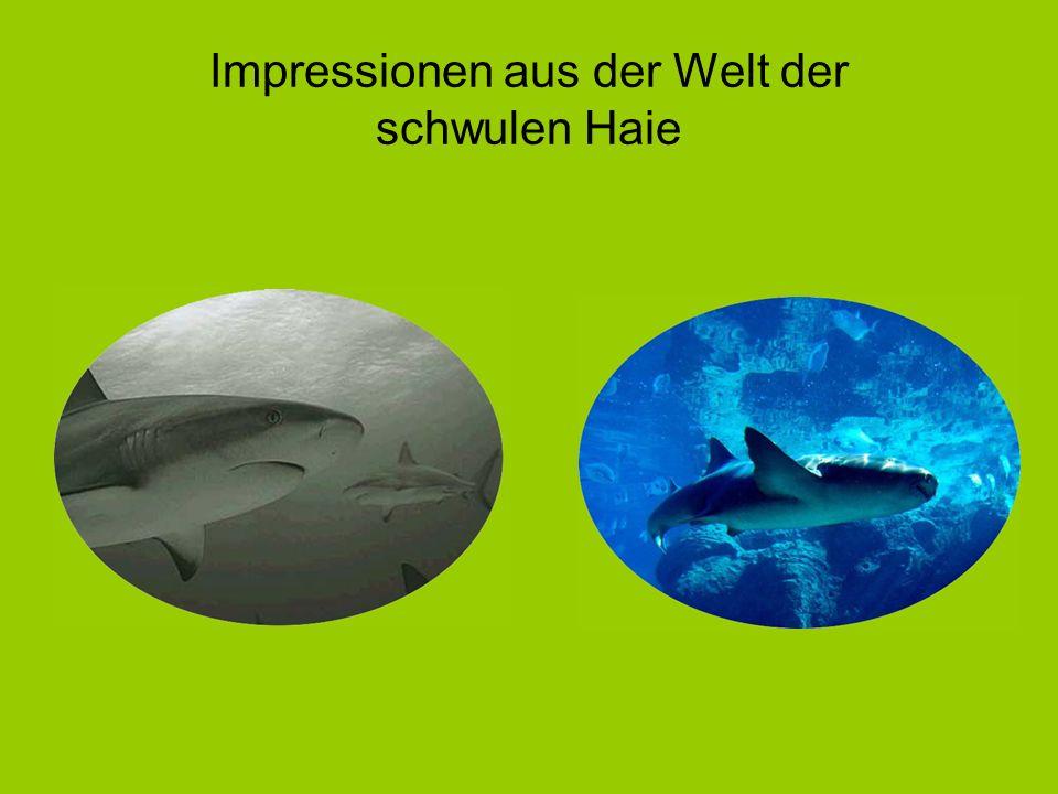 Impressionen aus der Welt der schwulen Haie
