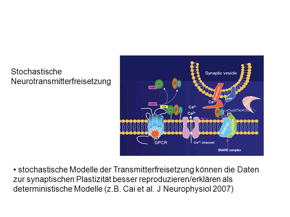 Stochastische Neurotransmitterfreisetzung