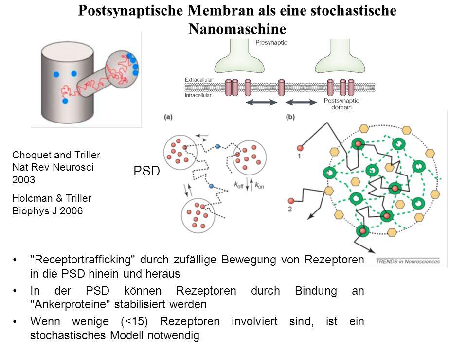 Postsynaptische Membran als eine stochastische Nanomaschine