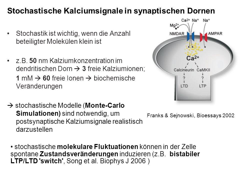 Stochastische Kalciumsignale in synaptischen Dornen